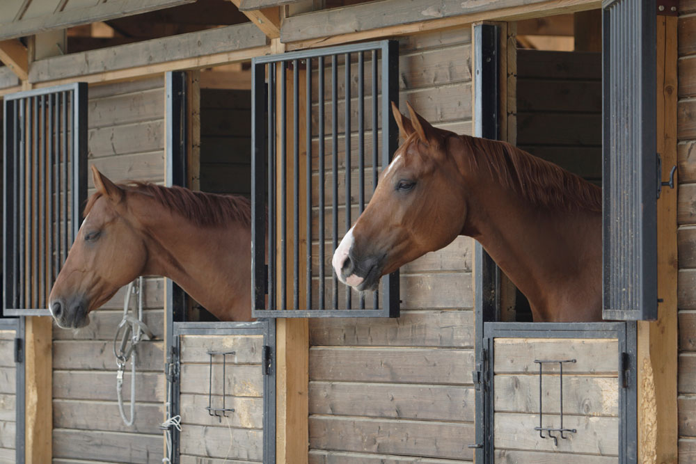 Image result for horses in barns